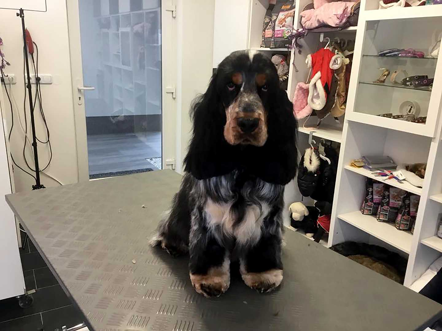 Hundesalon Anders! Rassestandards