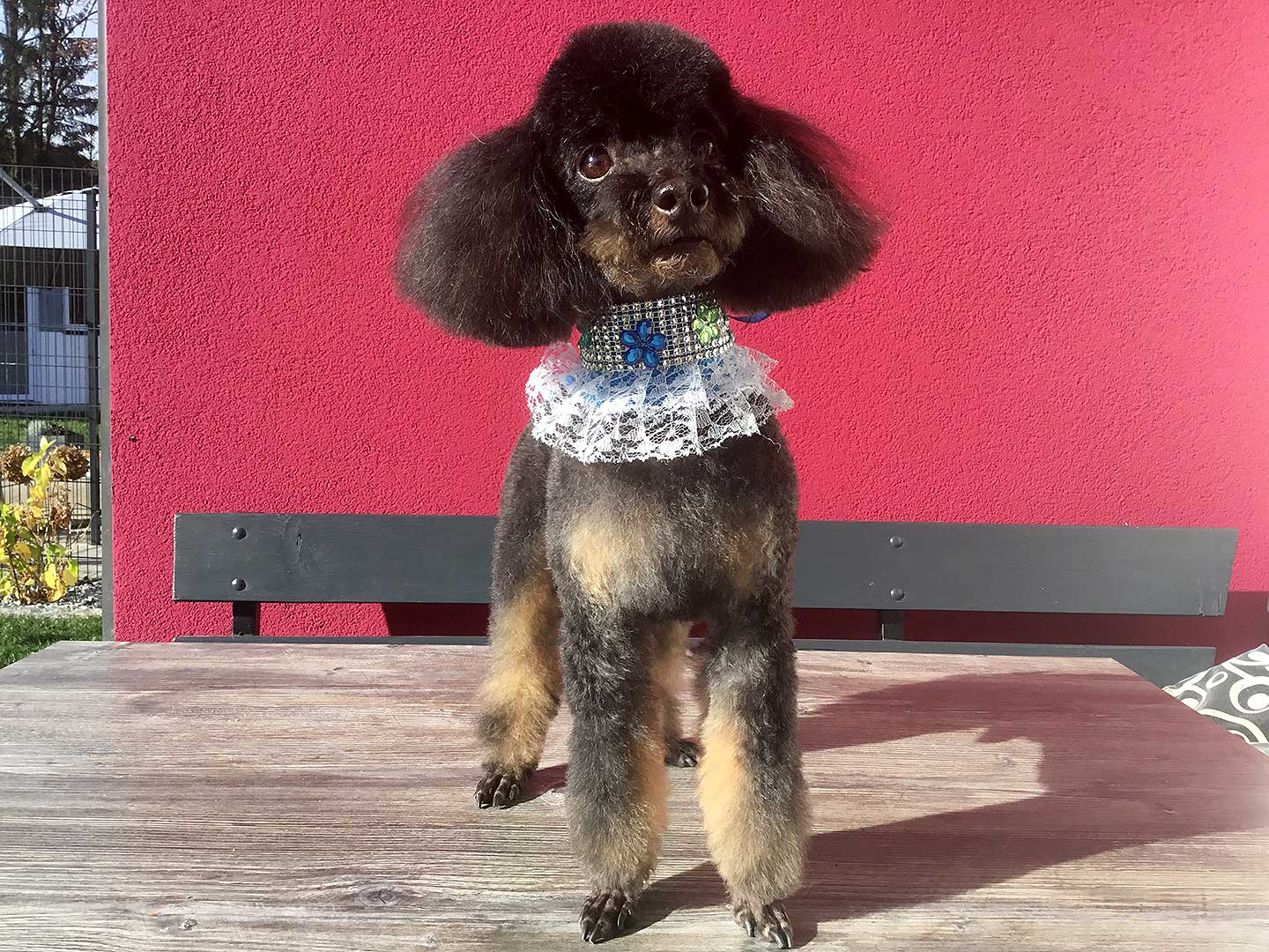 Hundesalon und Groomer-Schule Anders! Styling pfiffig